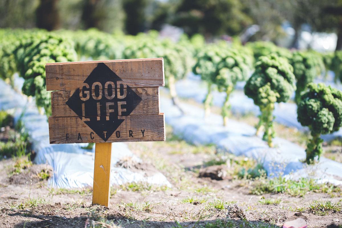 南青山のサラダショップ|GOOD LIFE FACTORY(グッドライフファクトリー)